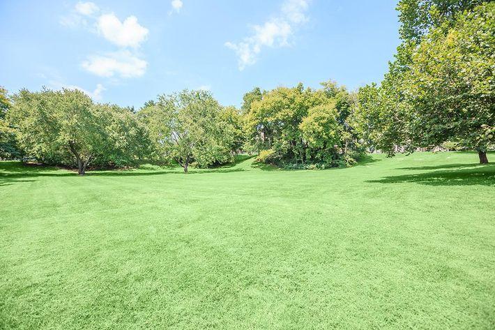 Grassy Field at Brendon Park