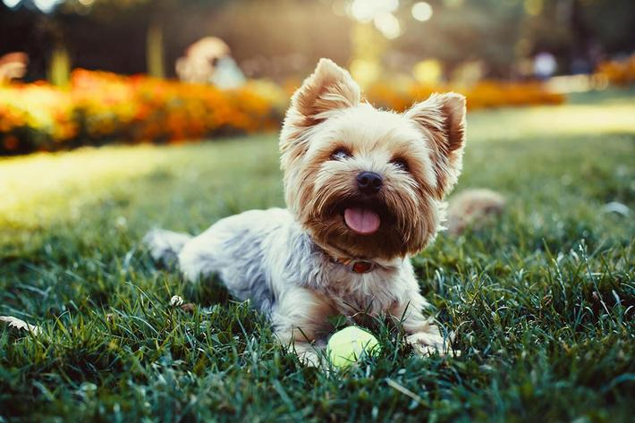 We allow pets at The Townhomes at Beau Rivage in Wilmington, North Carolina.
