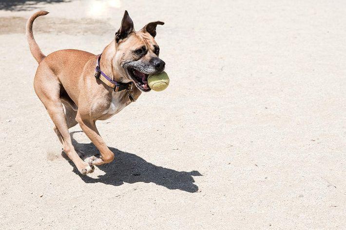 Dog-Handicapped-Tennis-Ball-Beach-GettyImages-820784556.jpg