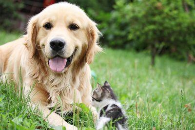amenities-dog-park2.jpg