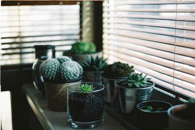 interior-window-succulents.jpg