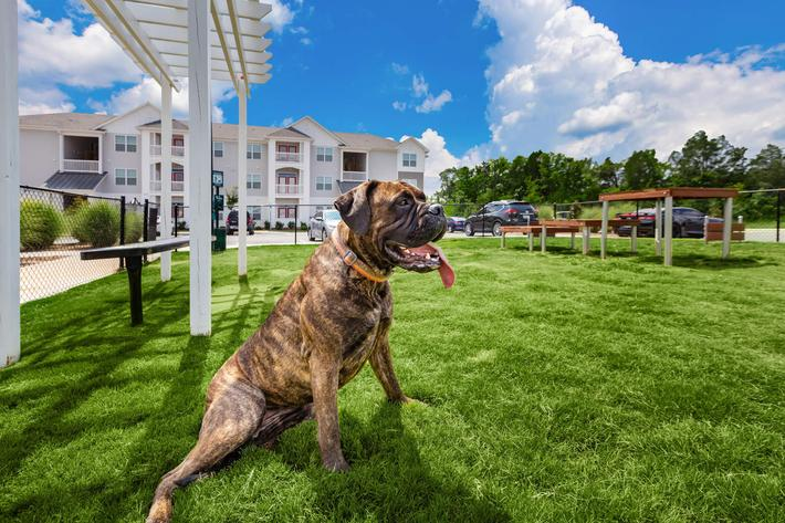 We are dog friendly  at Concord Ridge in Concord, NC
