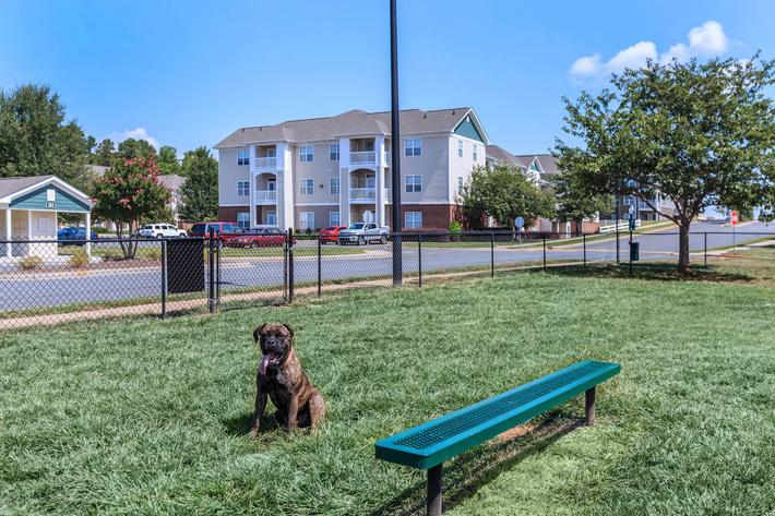 Hang out at the dog park at Bradford Park in Rock Hill, South Carolina