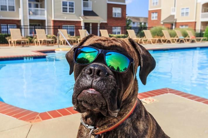 Stay cool with your furry companion at Bradford Park in Rock Hill, South Carolina