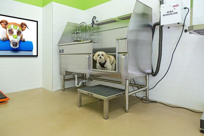 The-View-Dog-Spa---01.jpg
