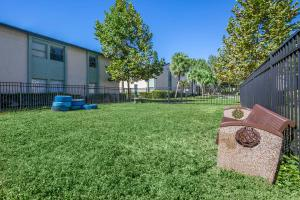 Run Around with Your Furry Friends at the Oasis at Bayside in Largo, FL