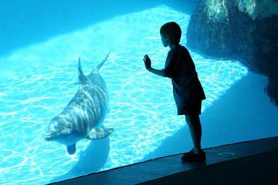Boy & Dolphin.jpg