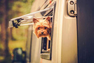 RV Travel with Dog.jpg
