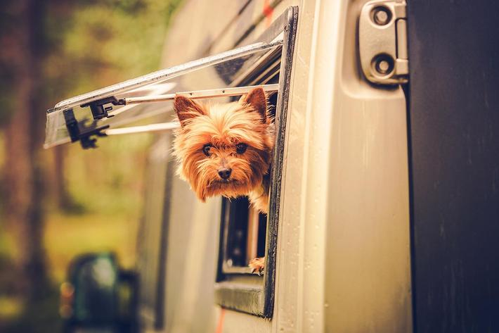 RV Travel with Dog.jpg