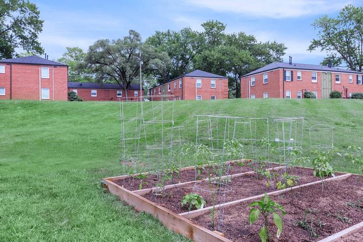 Community garden area here at The District in St. Louis, Missouri
