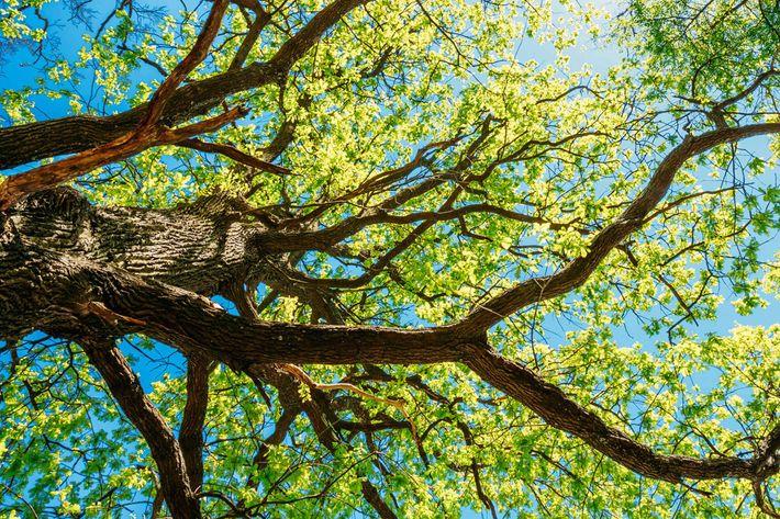 tree iStock-496775184.jpg