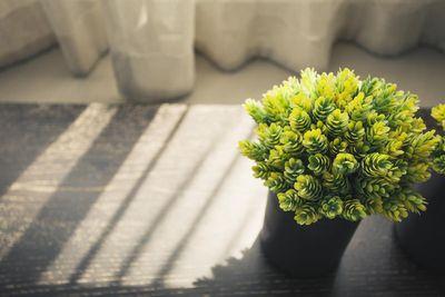 Green plant.jpg