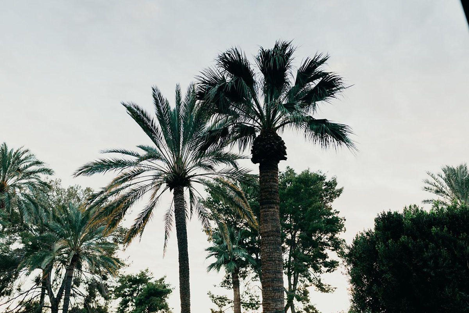 oasis-56.jpg