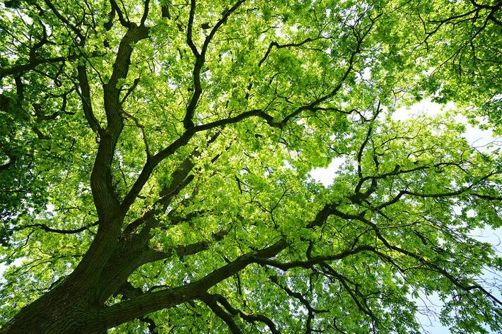 exterior-tree-mighty oak tree.jpg
