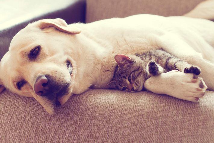 Pets-friendly Community