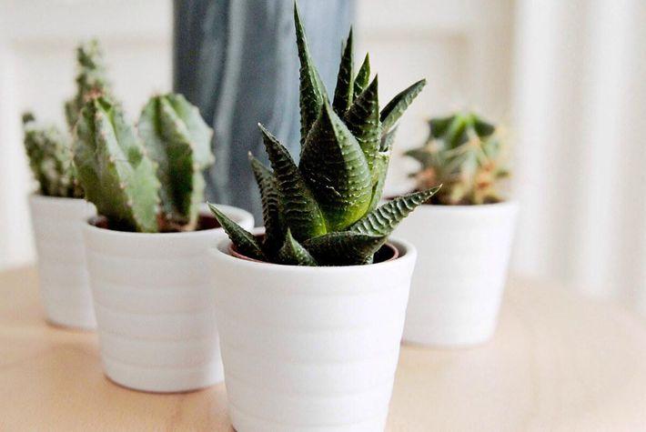 cactus-arrangement.jpg