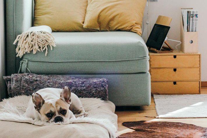doggy-in-living-room.jpg