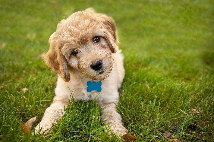Puppy -174938595.jpg
