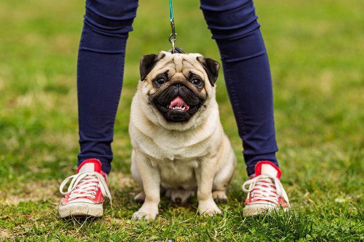 amenities-dog-park3.jpg