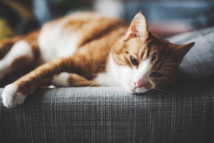 interior-livingroom-couch-cat.jpg