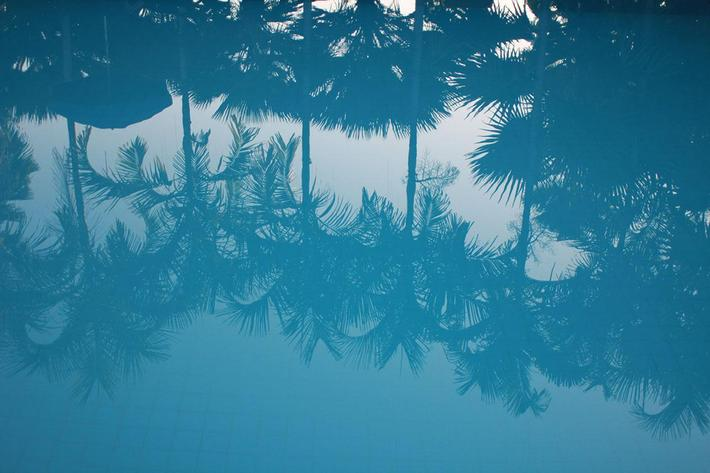 Reflections of Palms.jpg