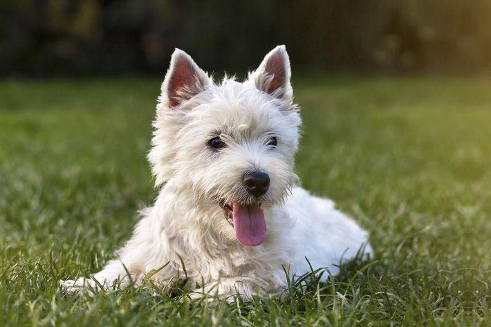 amenities-dog-park4.jpg