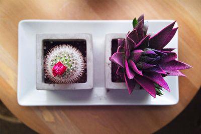 interior-dining-table-succulent.jpg