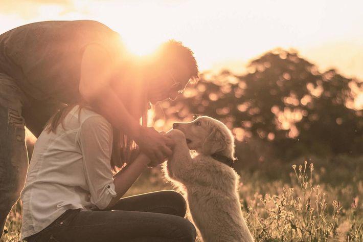 Dog & People-iStock_46758502 horiz.jpg