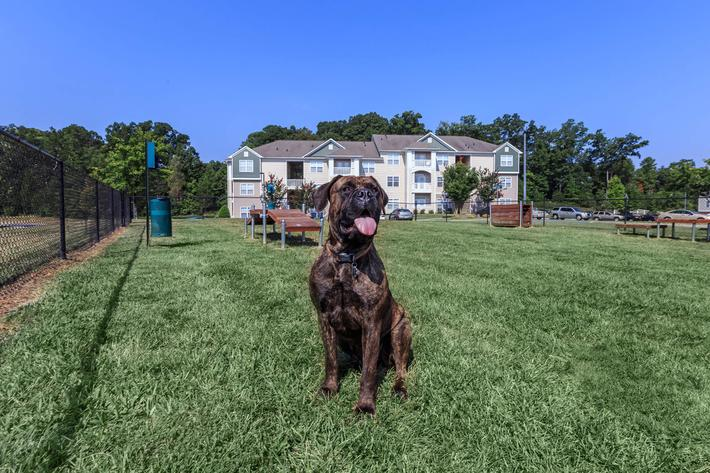 We Welcome Your Furry Friends At Mallard Glen In Charlotte, NC