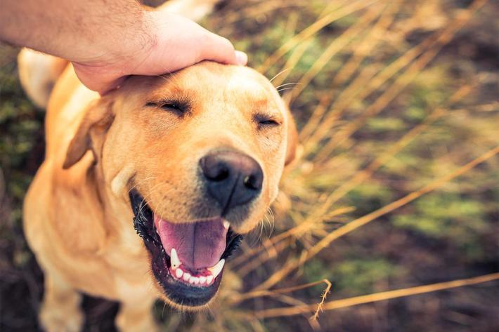 We are a Pet-Friendly Community here at The Passage Apartments in Henderson, NV