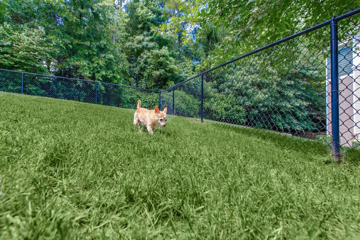 We have a pet park at Whisper Creek in Rock Hill, South Carolina.