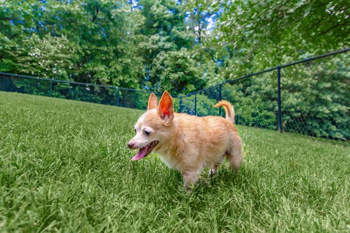 We love pets at Whisper Creek in Rock Hill, South Carolina.