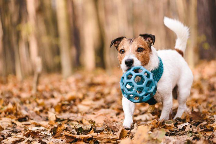 dog with ball -1186149607.jpg