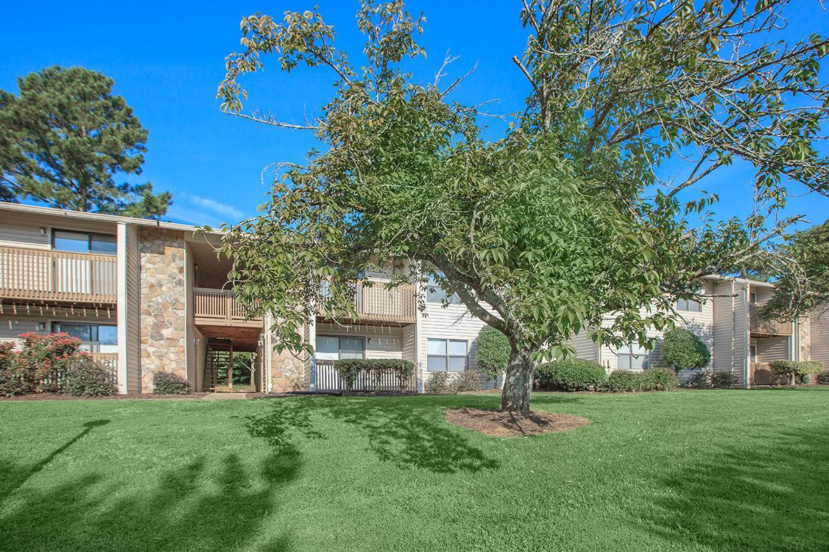 Large tree with shade at Laurel Ridge Apartments in Chattanooga, TN Home