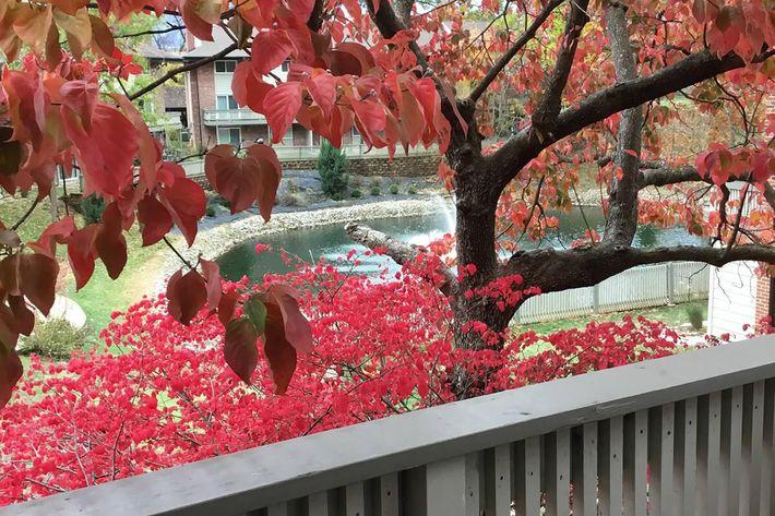 Fall 2018 WG pond.jpg