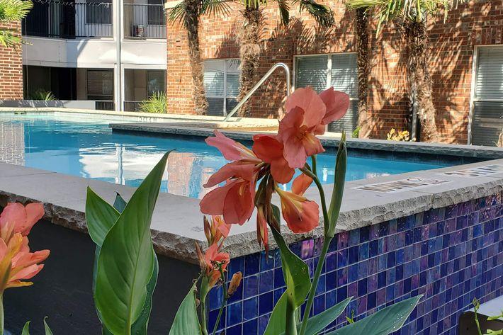 Ross pool flower-width-2400px.jpg