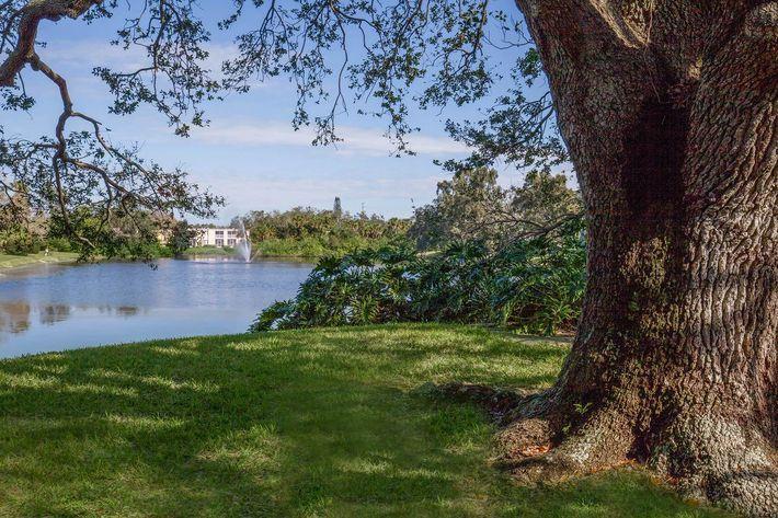Beautiful views at Arbor Oaks Apartments in Bradenton, FL.