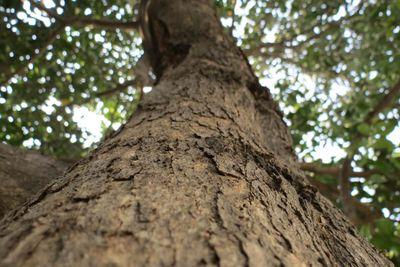exterior-tree.jpg
