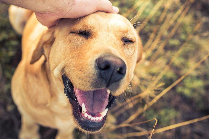Dog Petting.jpg